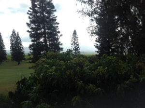 Taken July 2nd, 2015 from Upcountry Maui